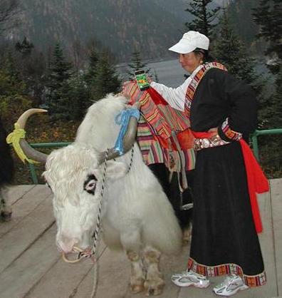 tibetanwomanyakiphone.jpg